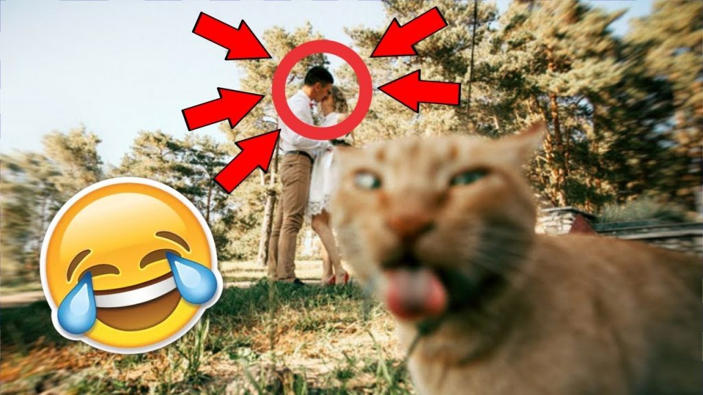 you WILL laugh! | Funny Cats Compilation 😹2#😹 Funny Cats Fails [BEST ANIMALS]