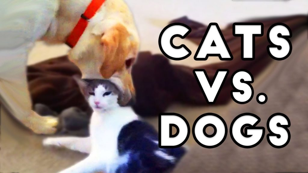 Funny Cats and Dogs – Cats Vs. Dogs | Funny Animals Compilation