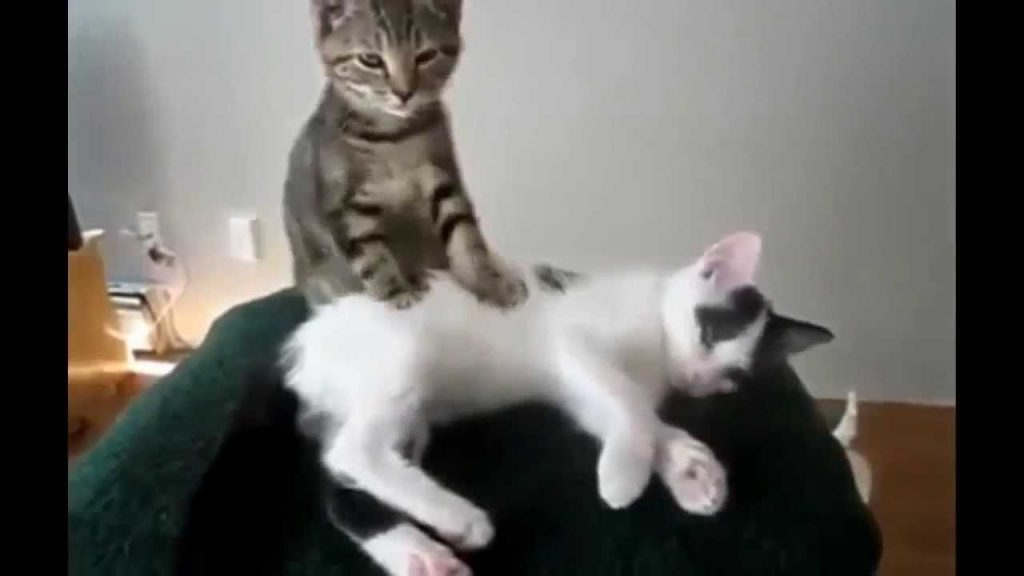 Epic Funny Cats Compilations 2013