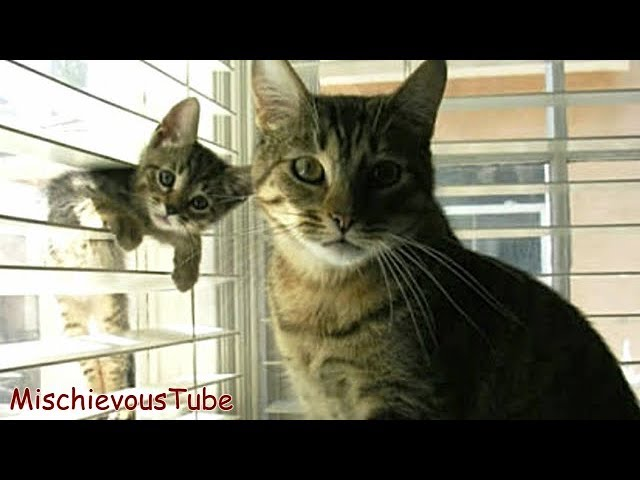 Try Not to Laugh or Grin: Funny Cats Compilation – Funny Cat Videos [part 4]