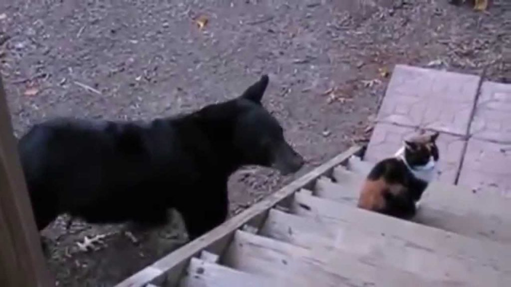 Cats Gone Wild: Cats Being Jerks – Cats Behaving Badly – Funny Cats