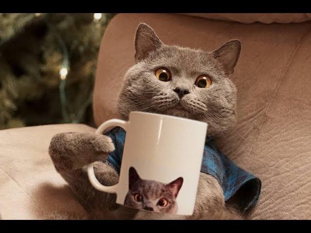 The All Best AaronsAnimals Vine Compilation 2017 – Funny Cats Vine || BestVine