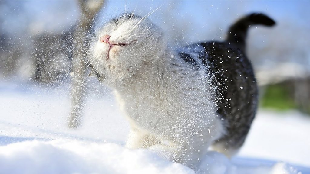 Funny cats vs Snow | Cats Playing in Snow Compilation