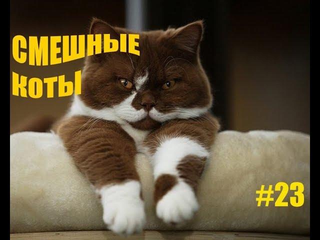 Приколы с котами Смешные коты Приколы собаками Смешные собаки 2017 Funny cats Funny dogs  приколы