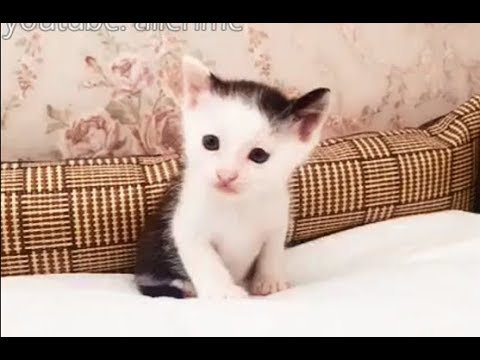 Top 10 Funny Cat Videos – Funny Cats 2017