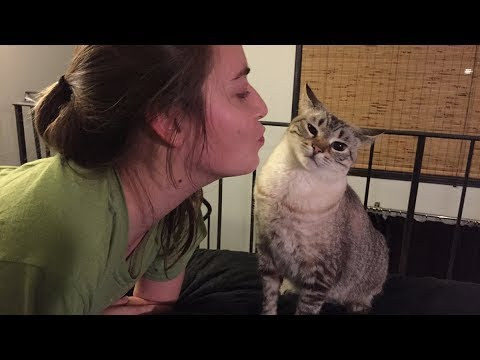 Funny Cats React To Kisses !