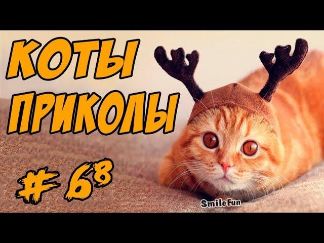 Приколы с Котами  2017 Смешные коты и кошки До Слёз Funny Cats Compilation
