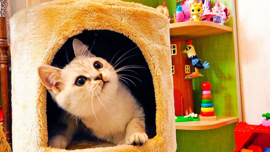 СМЕШНОЕ видео про котенка Бантика собираем когтеточку для kittens funny cats NEW SAVI