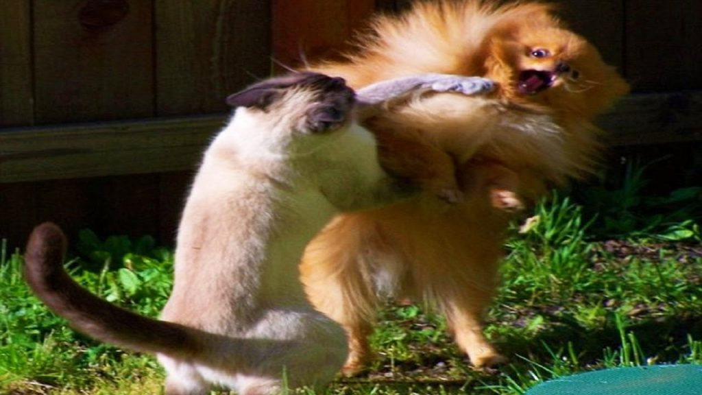Animal Videos ► Funny Cats Boxing Dogs Compilation 2015 ► Animals TV