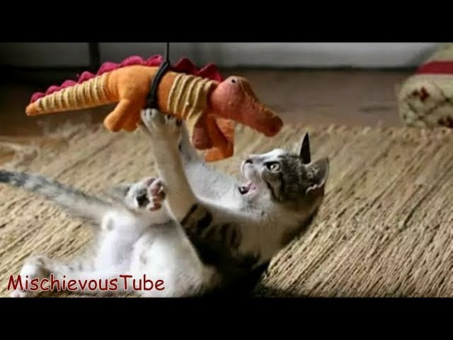Try Not to Laugh or Grin: Funny Cat Videos – Funny Cats Compilation [part 5]