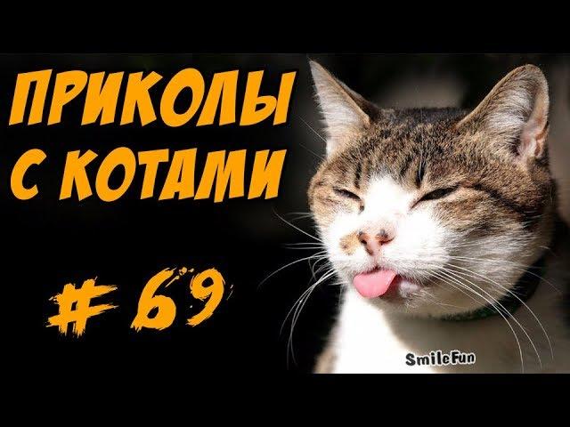 Смешные Коты Видео Кошки ДО Слёз 2017 Приколы с котами Funny Cats Compilation