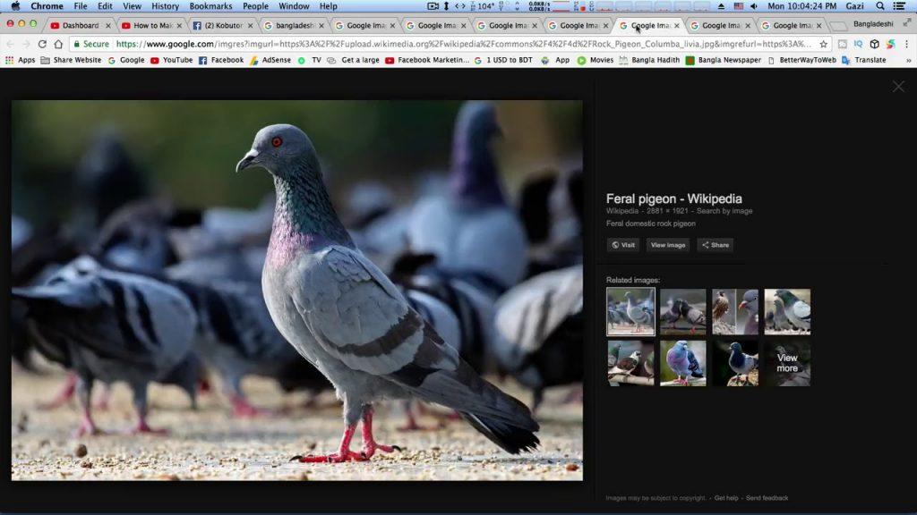 Siter modde kobutorer jotno || kobutor o sit || pigeon care || pigeon information || pigeons lover