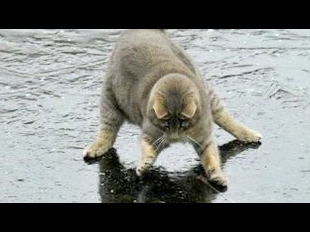 You will LAUGH SO HARD that YOU WILL FAINT – FUNNY CAT compilation