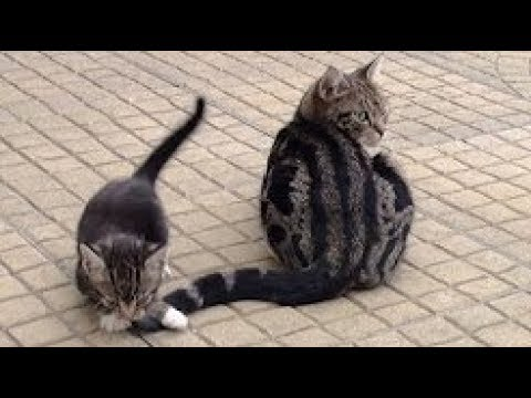 Cat and Kitten Vs Tail Compilation 2017 – Funny Cats Video