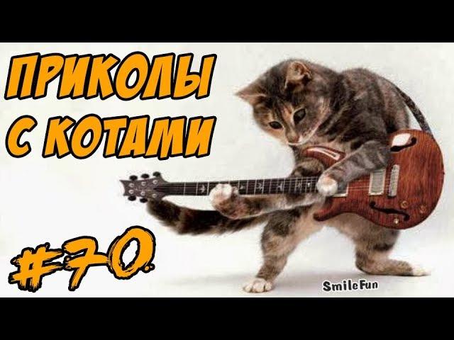 Смешные Коты Видео Кошки Приколы с котами Funny Cats Compilation 2017