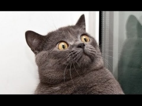 YOU LAUGH YOU LOSE Funny cats Compilation 2017 – Compilation Of Funny Cat Video