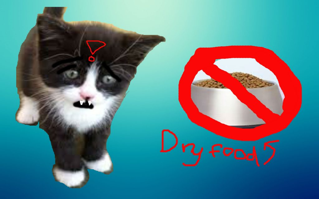 STOP FEEDING CATS DRY FOOD – Cat Care