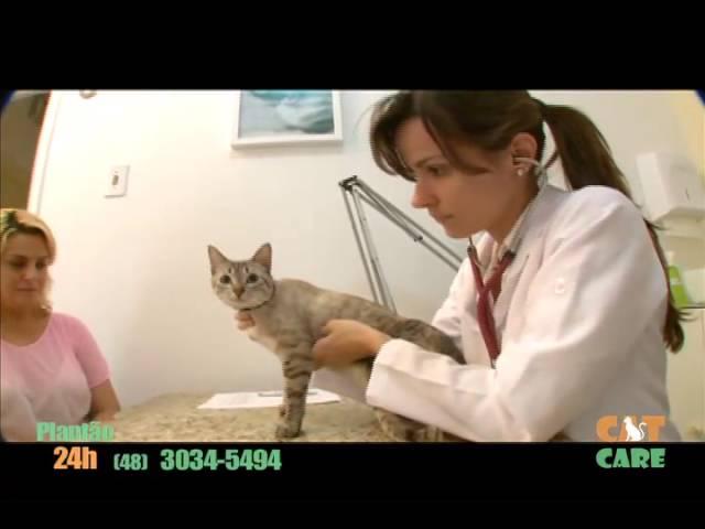 Cat Care Clínica Veterinária – Seu Gato merece esta qualidade