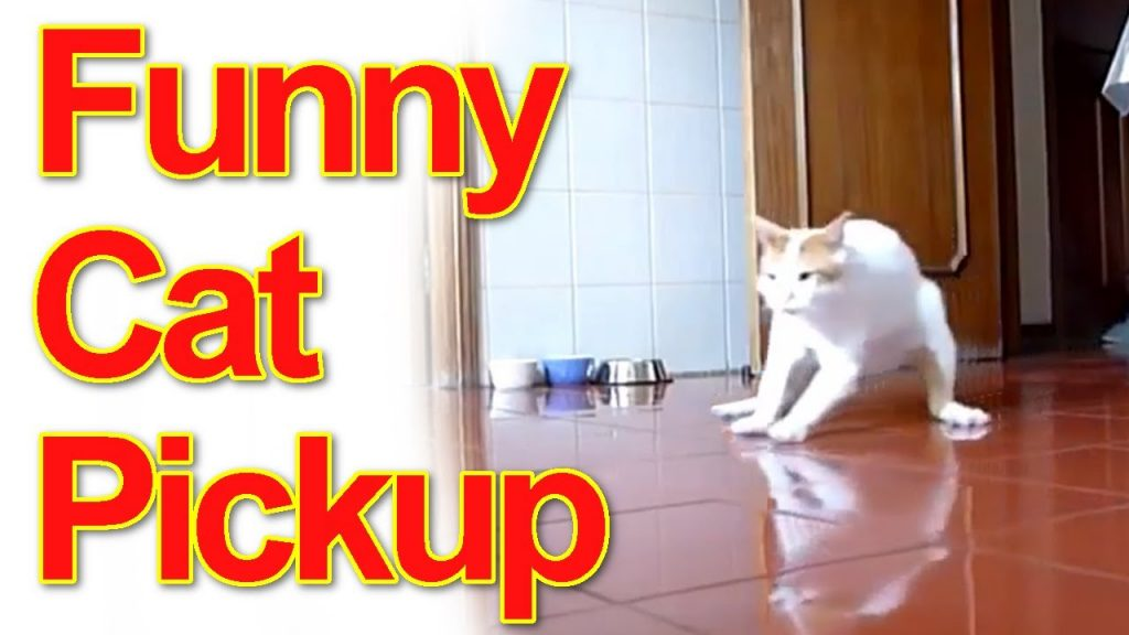 Funny Cats Special Pick Up Compilation #1