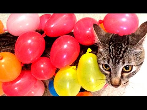 CATS VS BALLOONS | Funny Cats Popping Balloons compilation | funnycat12