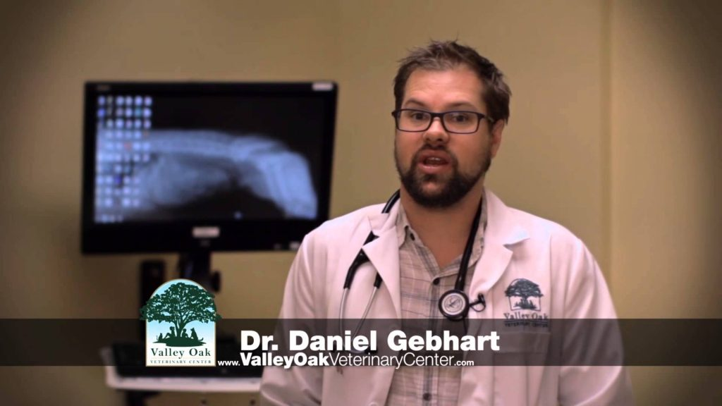 Valley Oak Veterinary 2015 VOPT 0016 Pet Tips Cat Care