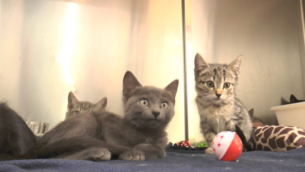 The El Fenix Kittens say hello from the Cat Care Center!