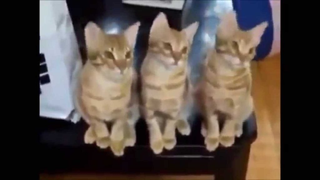 Funny Cats Compilation – Smart Cats Playing AMAZING Trick