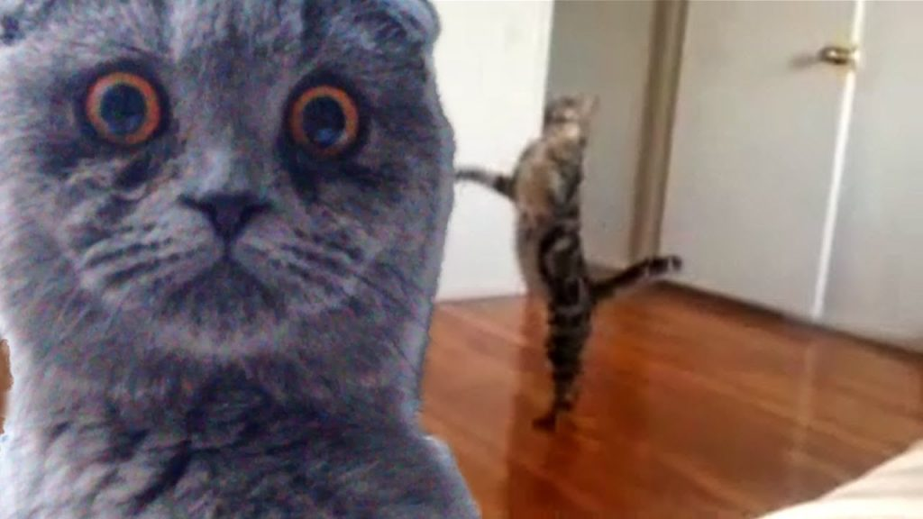 "Epic Funny Cats – Compilation Part Two ""The Cat Strikes Back!"""