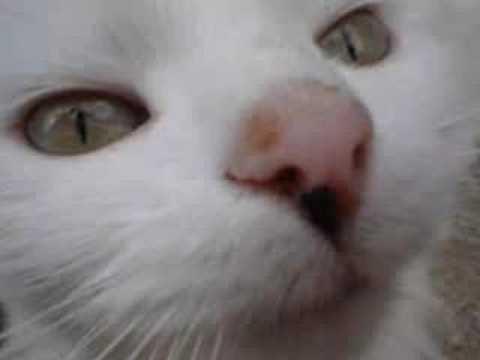 Cat Symptoms Cat Care Secrets Exposed