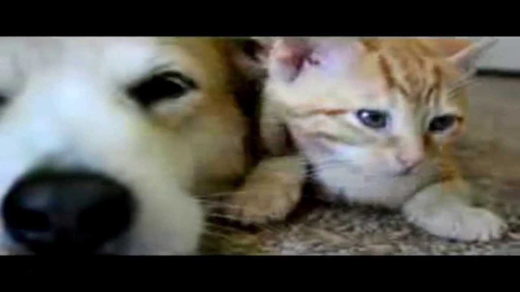 Funny Cats and Dogs Animal Videos