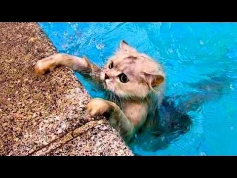 Cats Vs Water – Cats Falling In Water – Funny Cats – Funny Cat Bathing Compilation