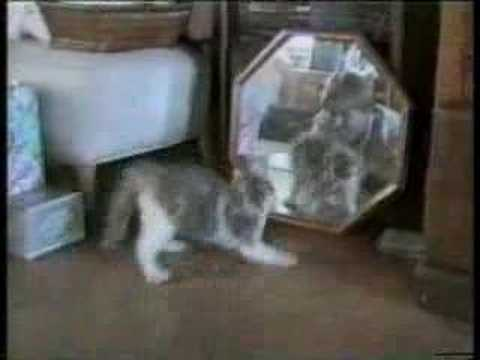 AFV – Funny Cats