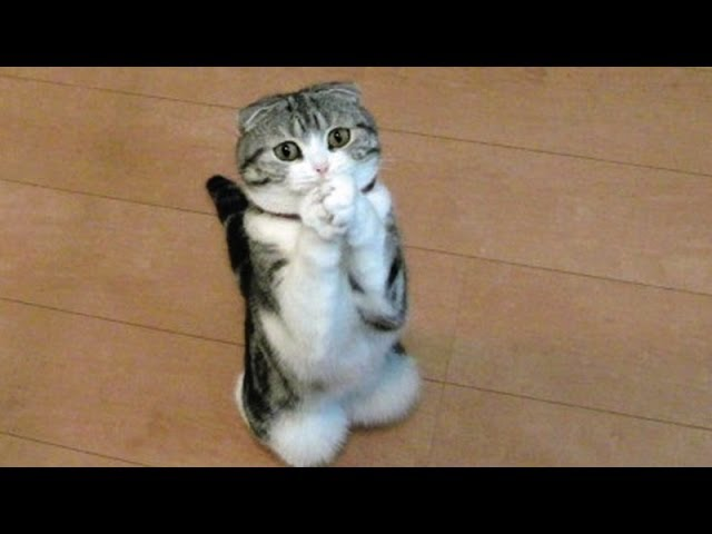 Funny cats and dogs begging for food – Cute animal compilation