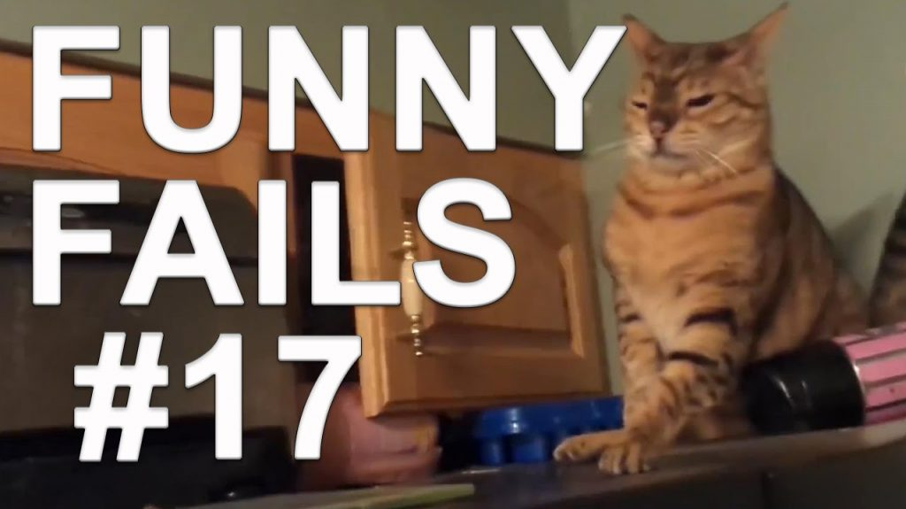 Funny Cats with sound effects – Funny cats compilation