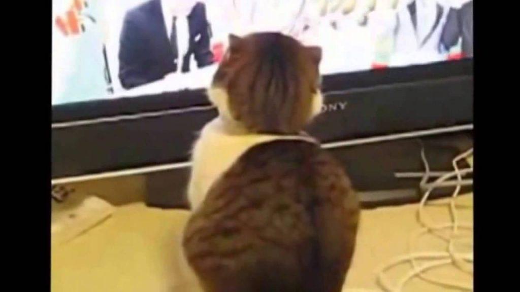 CRAZY FUNNY CATS