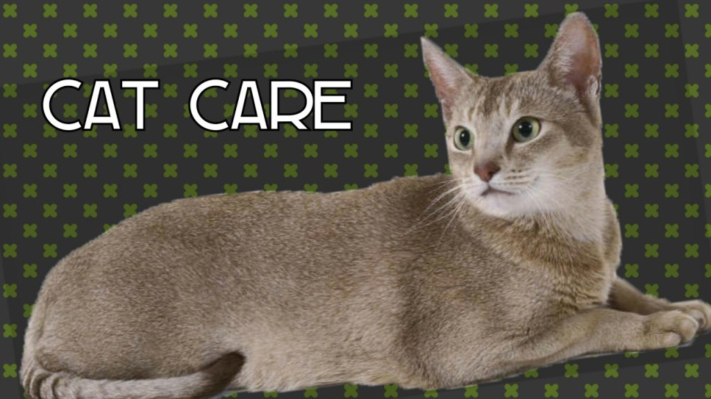 Video 29: Cat Care + YouTube Tip