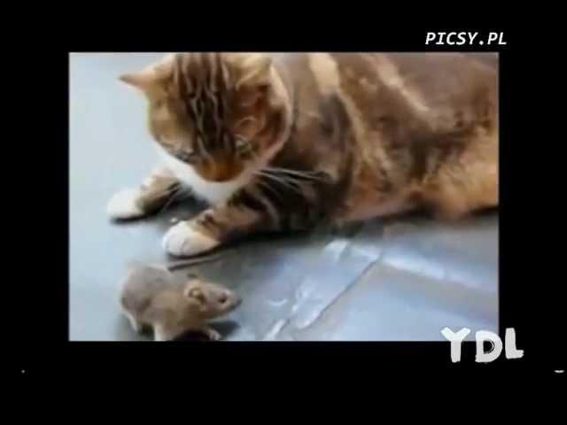 Śmieszne koty / Funny Cats Compilation