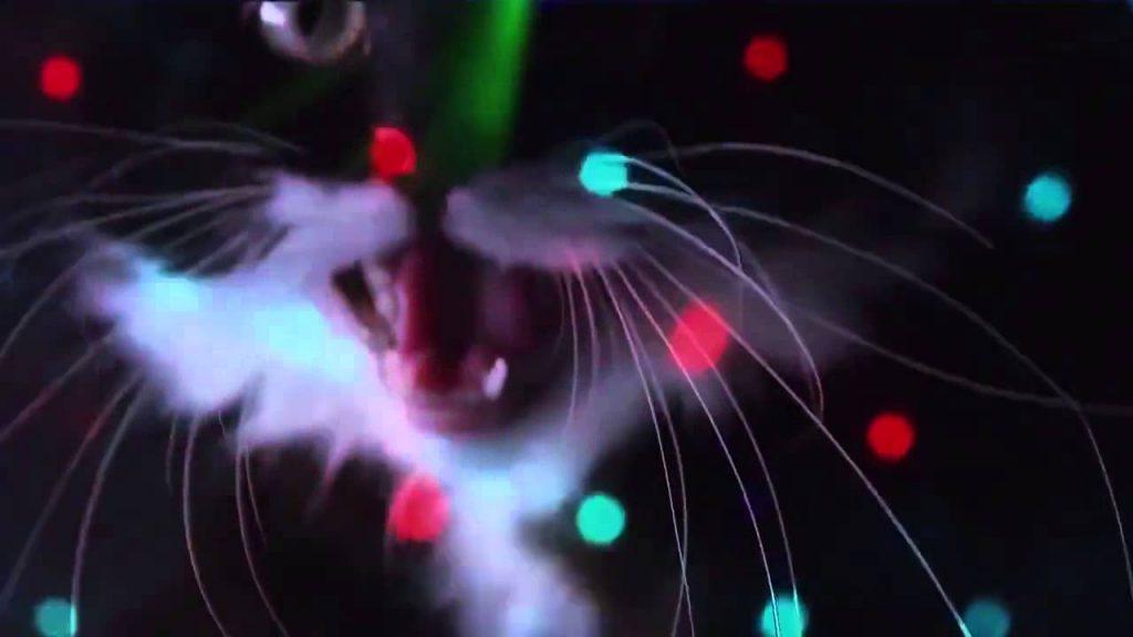 Funny Cats – Meow Meow DJ Mix