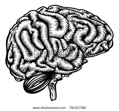 stock-vector-human-brain-in-profile-anatomical-drawing-in-a-vintage-woodcut-etching-style-791317786.jpg