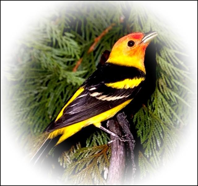Feeding-Birds-in-the-Tropics