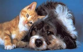 Flying-your-Dog-or-Cat-to-Ecuador