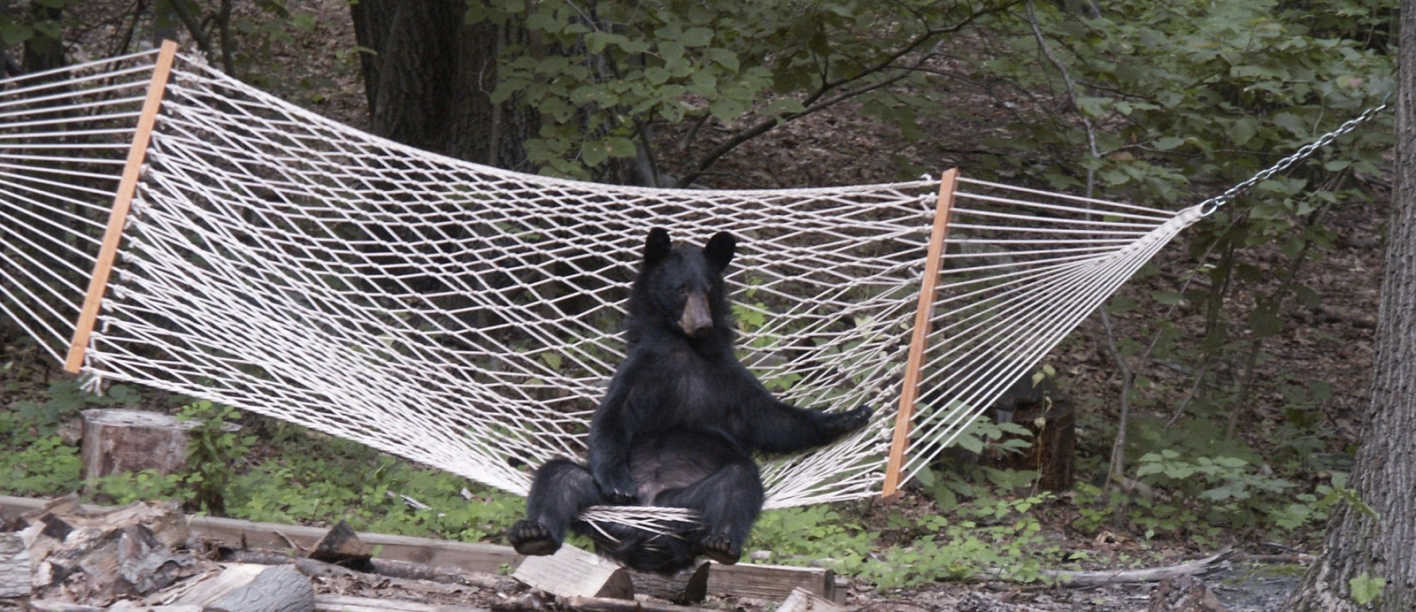 3 Ways To Stay Safe From Wild Animals When You Hammock