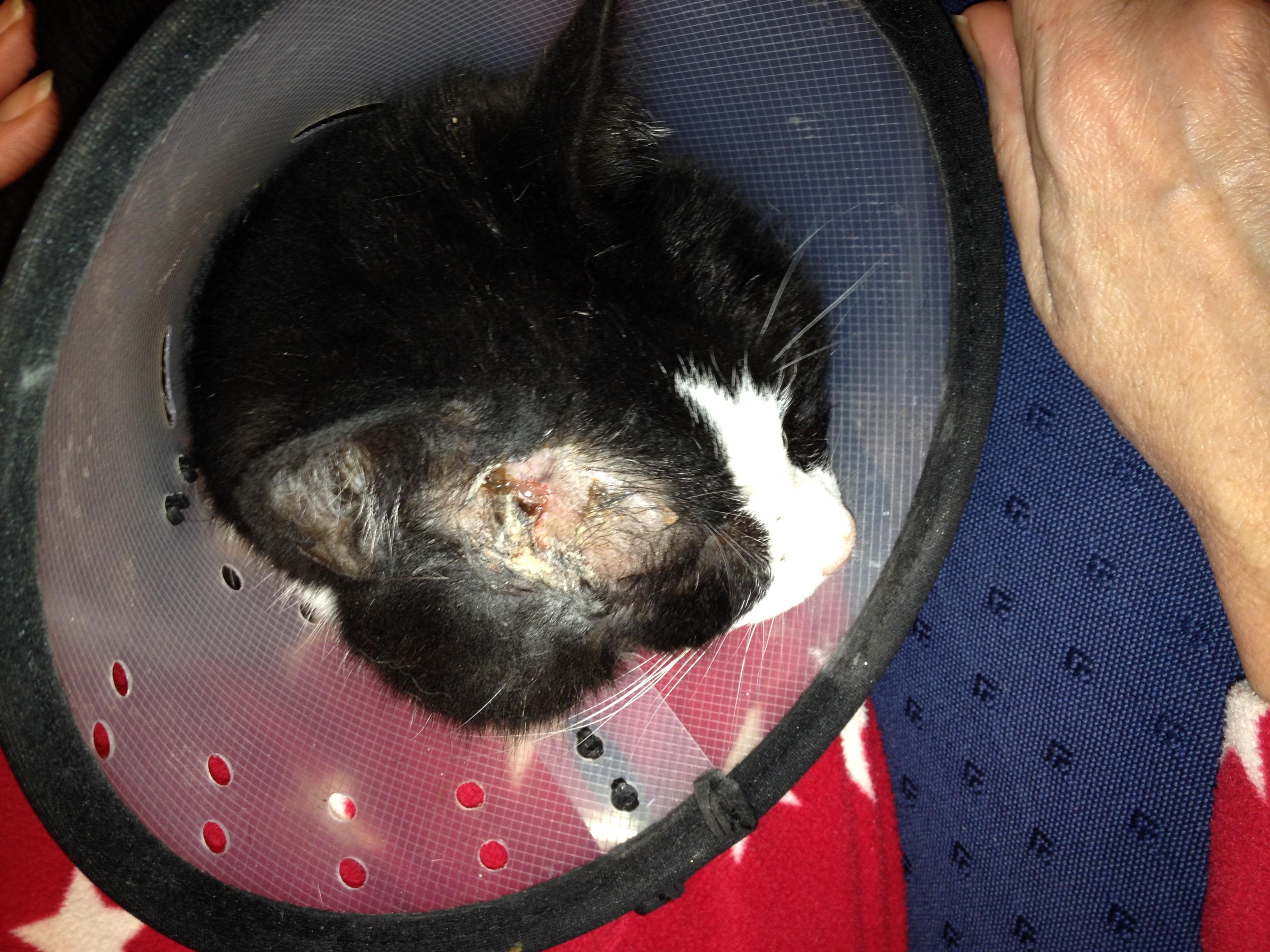 Zapper head wound