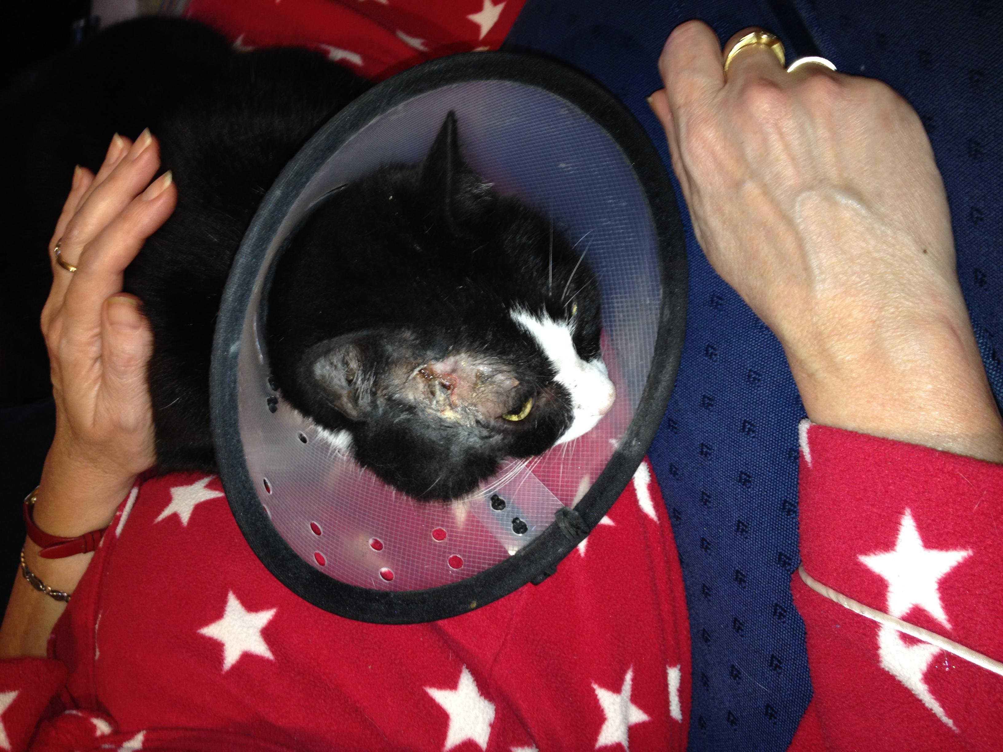 Zapper head wound 1