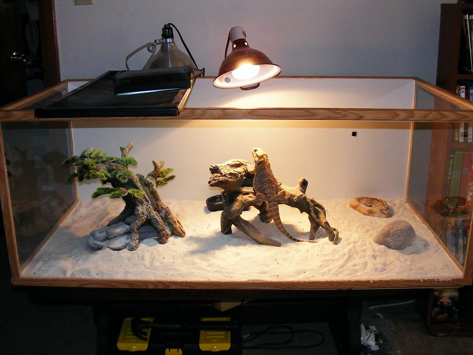 My bearded dragon is not going to the bathroom and when he ...