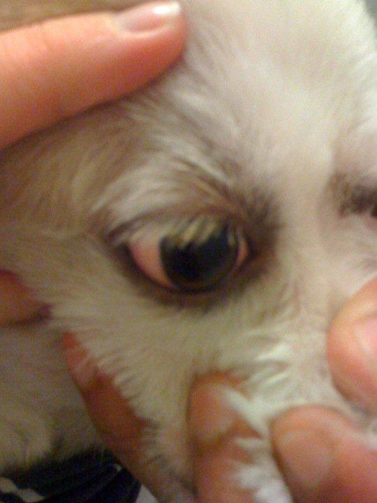 Dog Scratching Ear A Lot