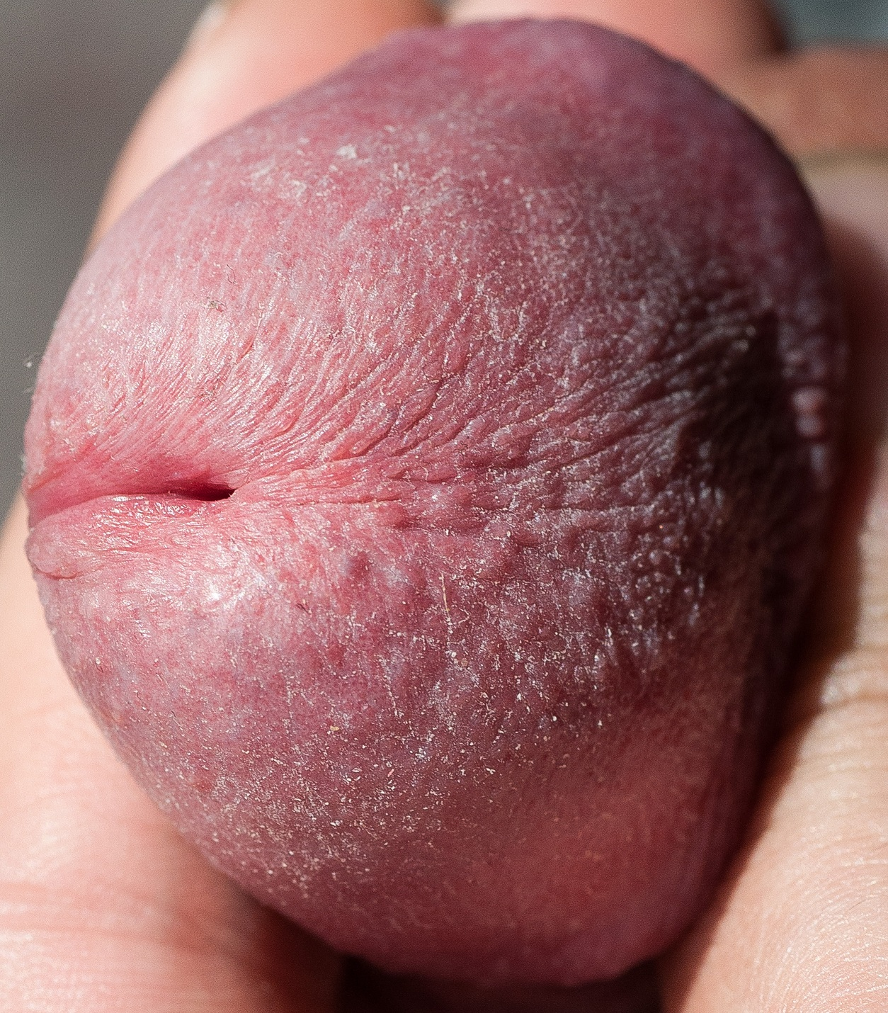 chubby cum nipples