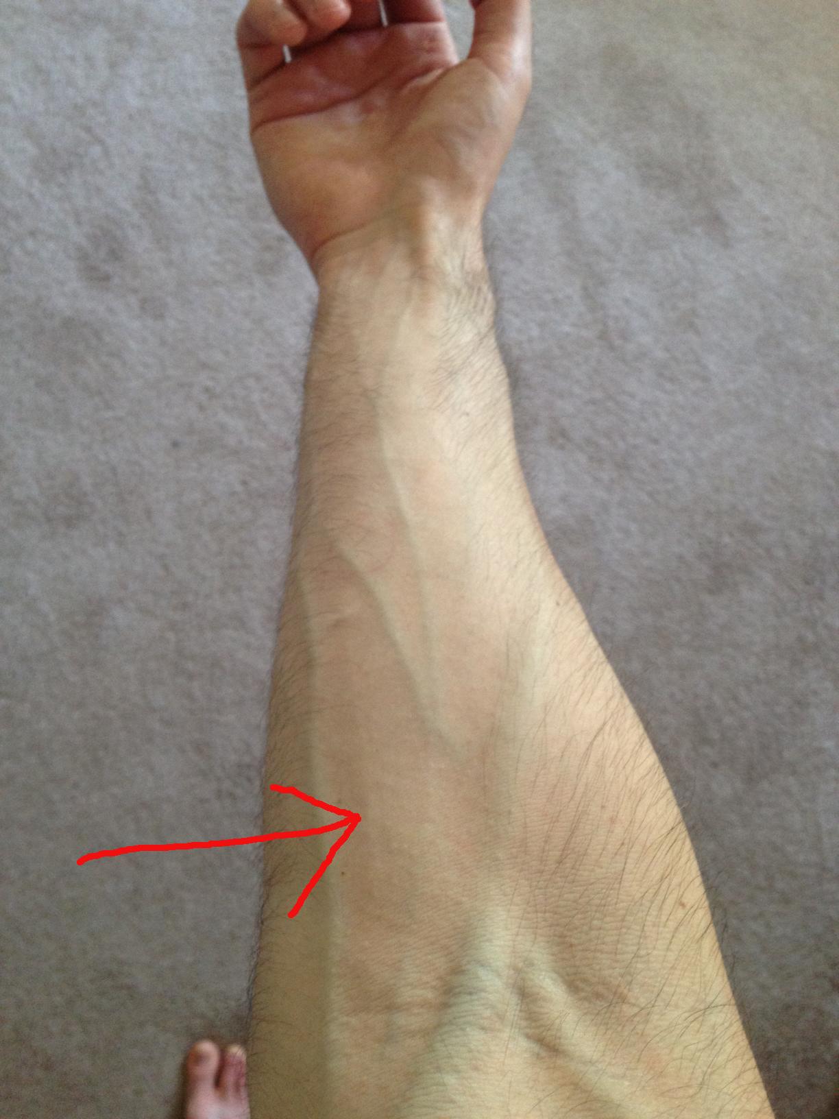 my forearm how tall