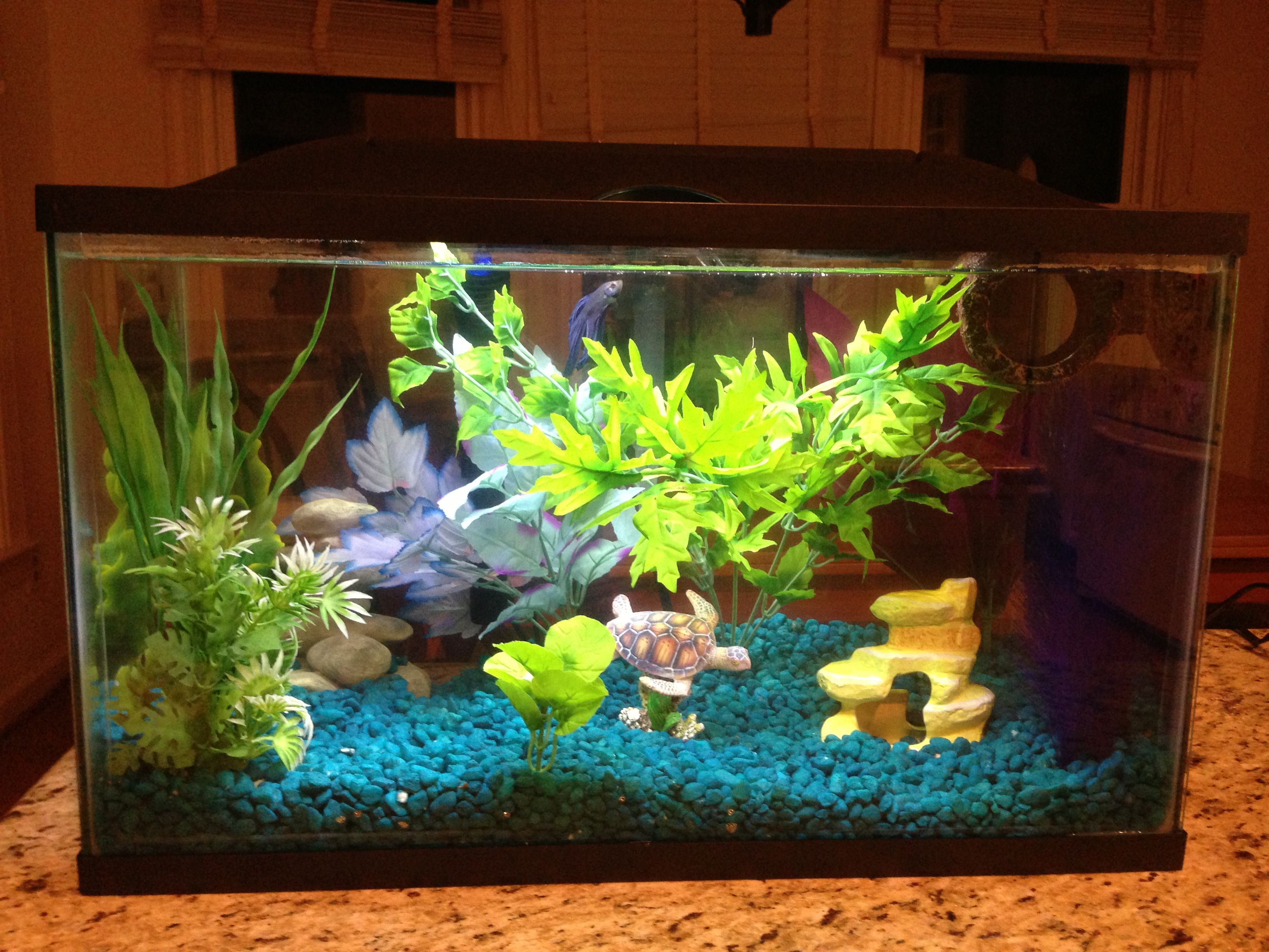 Fish tank decorations 10 gallon diy betta fish tank for Betta fish tank ideas