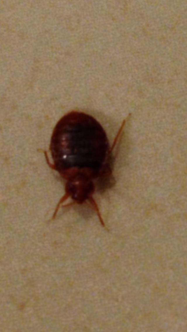 bed bugs bathroom americas best value inn tulsa airport bug in my bathtub bed bug